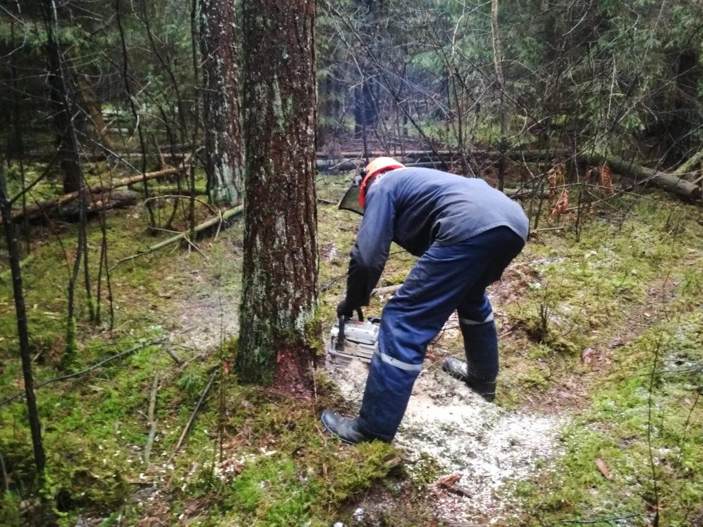 Участие студентов лесохозяйственного факультета в НИРС